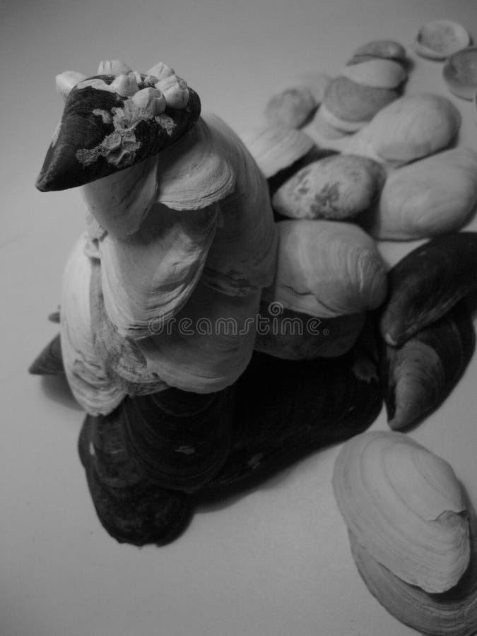 壳雕塑 自然的抽象 免版税库存照片