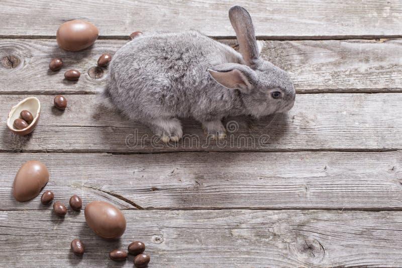 复活节兔子用在木背景的朱古力蛋 库存图片