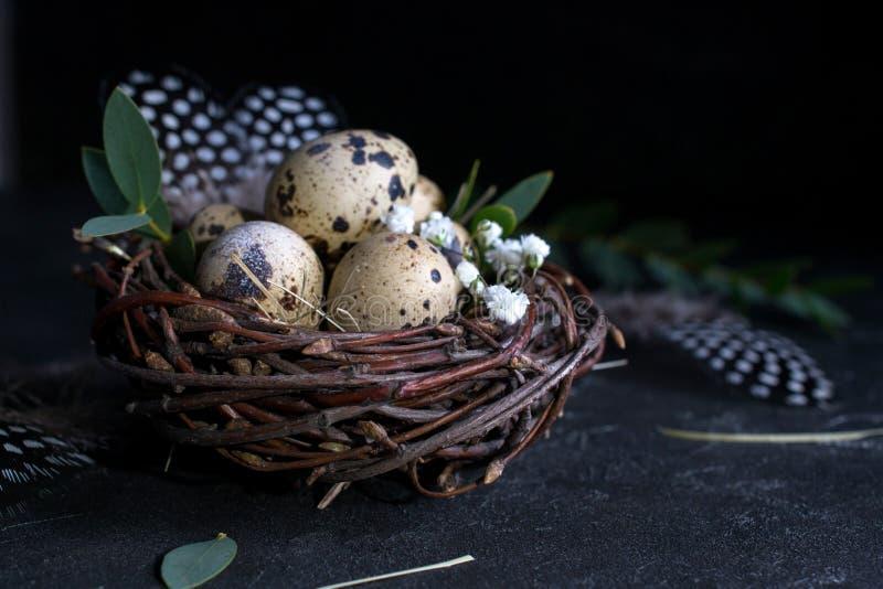 复活节概念-装饰杨柳巢用鹌鹑蛋,在黑暗的生锈的背景的羽毛 Copyspace 库存图片