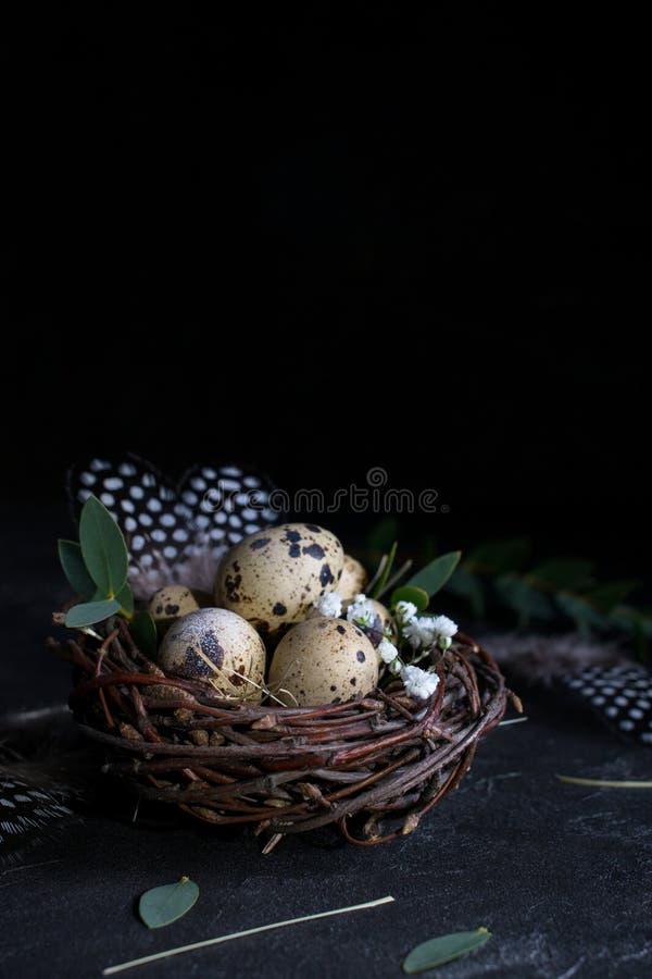 复活节概念-装饰杨柳巢用鹌鹑蛋,在黑暗的生锈的背景的羽毛 Copyspace 库存照片