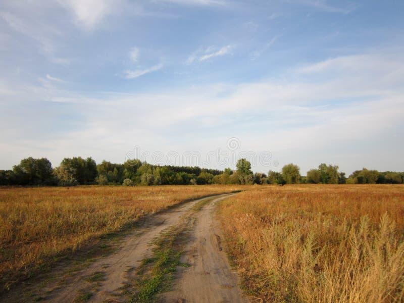 夏天或早秋天场面与审阅草甸的含沙路用干草本 库存图片