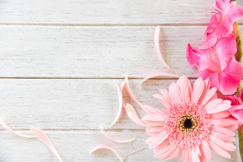 大丁草桃红色剑兰花春天夏天和瓣在白色木背景装饰 免版税库存图片