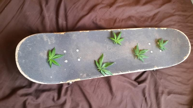 大麻生叶滑板甲板 免版税库存图片
