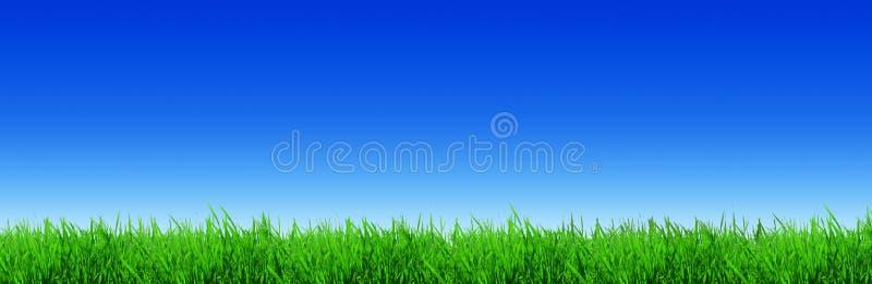 太阳照亮的新鲜的绿色草叶 库存图片