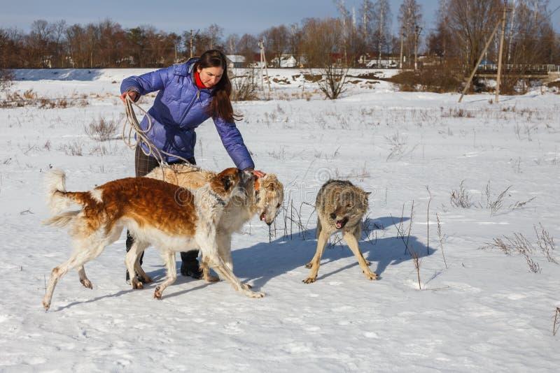 女孩、使用在领域的狼和两似犬灵狮在雪的冬天 库存图片
