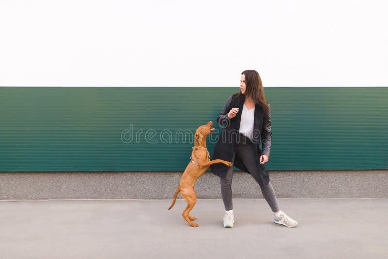 女孩和棕色狗反对色的墙壁背景  女孩使用与小狗,当走时 免版税库存照片