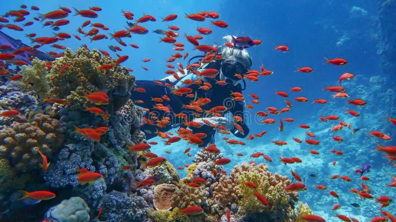 妇女在美丽的珊瑚礁附近的轻潜水员-围拢与美丽的红珊瑚鱼,anthias浅滩  图库摄影