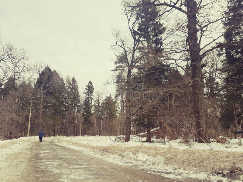 妇女去滑雪在从后面的一个绿色多雪的冬天森林视图 免版税图库摄影