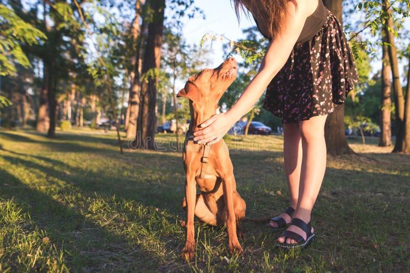 妇女和一条逗人喜爱的幼小狗在公园在夏天晚上 步行在森林在asummer晚上 库存照片
