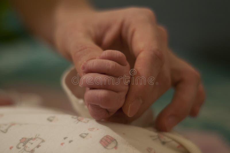 婴孩手在mother's手上 微小的桃红色手 逗人喜爱的婴儿 家庭片刻 库存照片