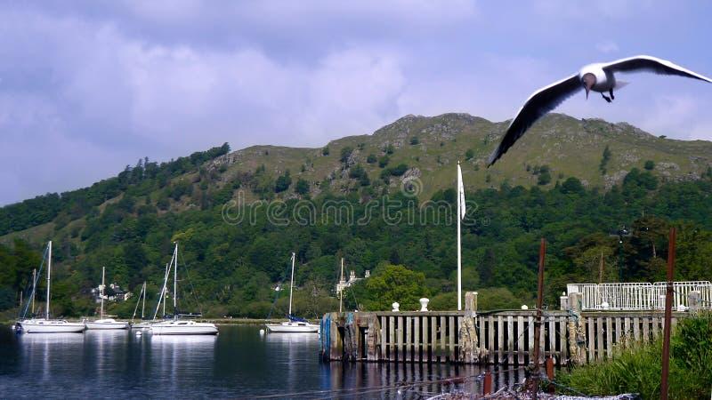 宽银幕被停泊的小船和海鸥 免版税库存照片