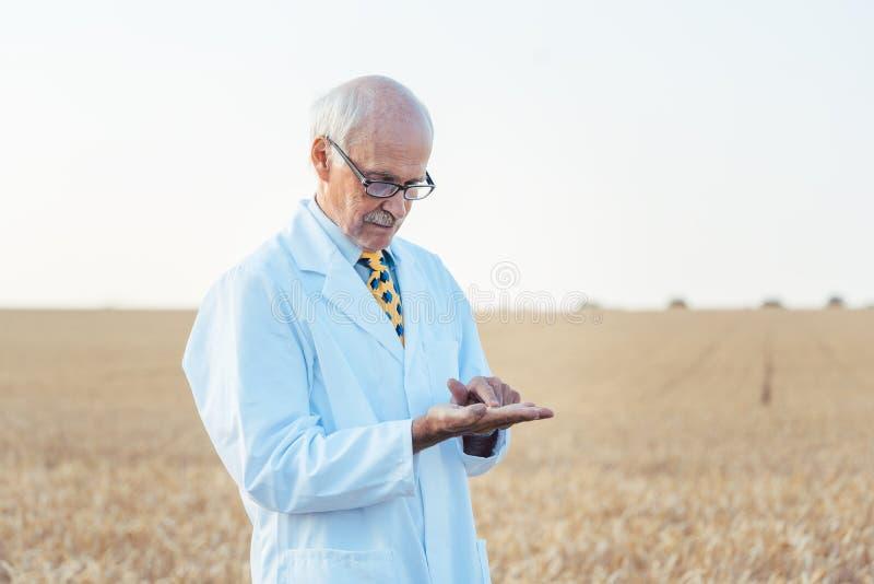 寻找新的种子的质量的农业科学家 图库摄影