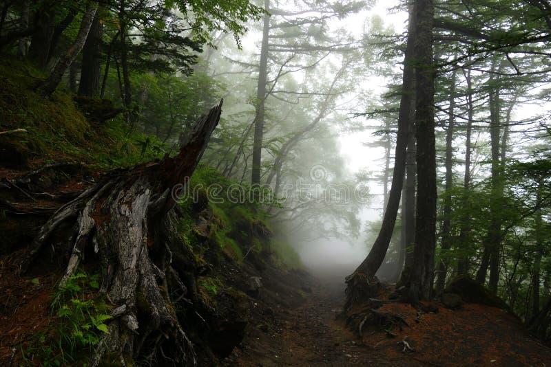 富士山的道路通过有雾的,日本一个小森林 免版税库存图片