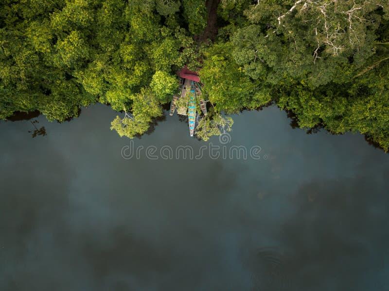 寄生虫被射击密林在雨前 库存照片