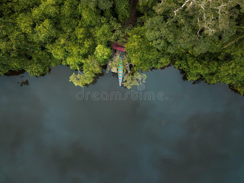 寄生虫被射击密林在雨前 库存图片