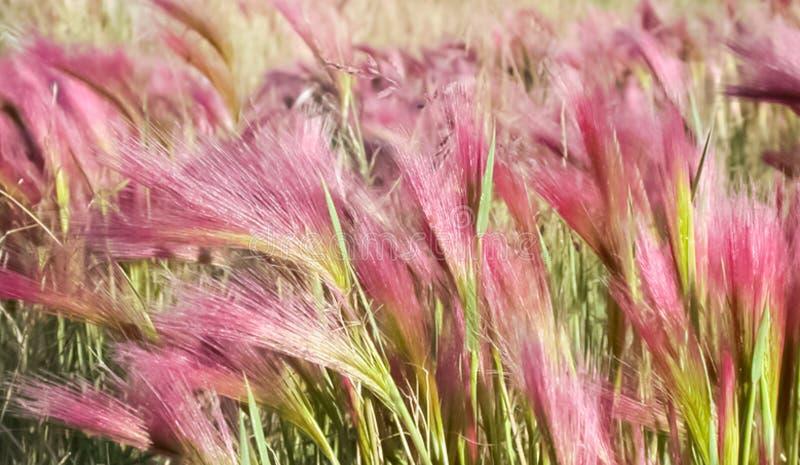 寒带草原植物、草和花在Chukotka 库存照片