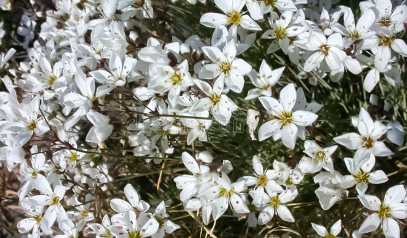 寒带草原植物、草和花在Chukotka 图库摄影