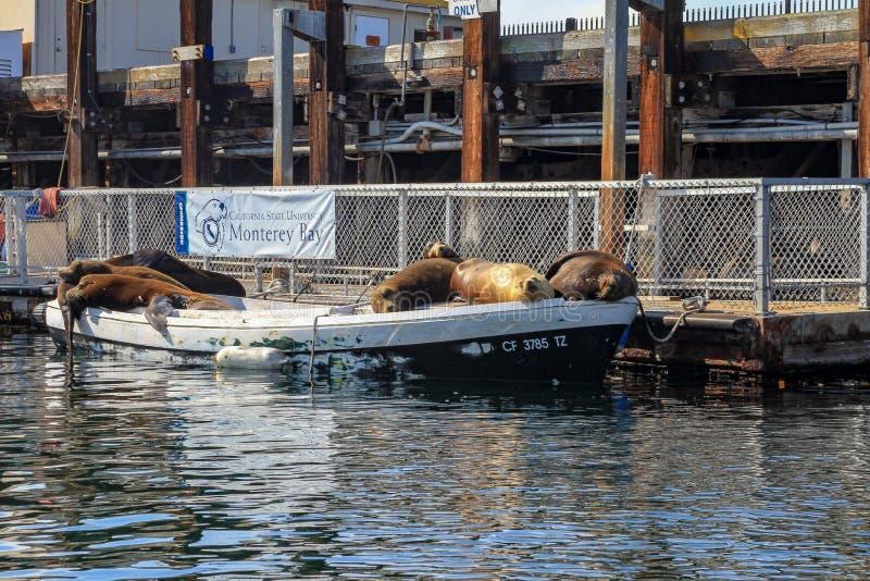 封印或睡觉在一条被停泊的小船的海狮 图库摄影