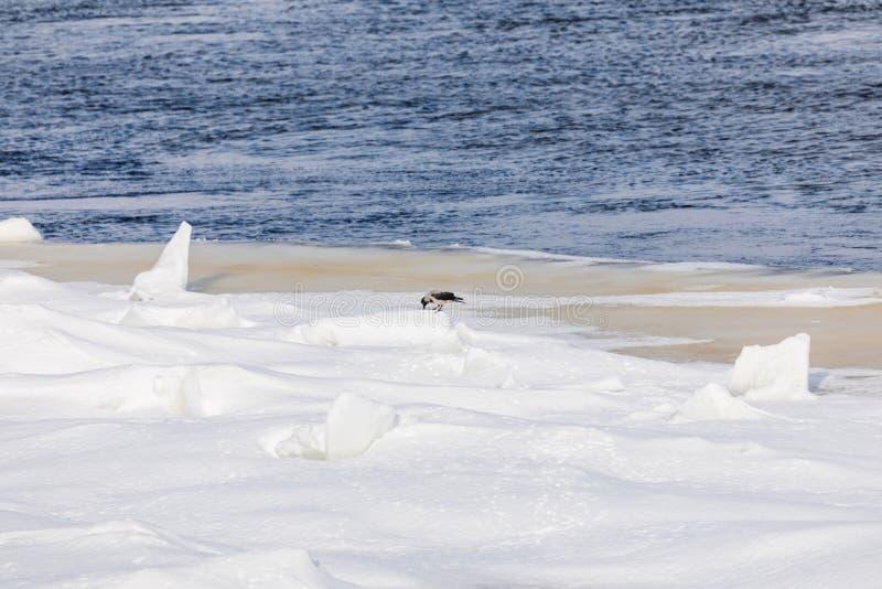 小丘和浮冰在冬天河 免版税库存照片