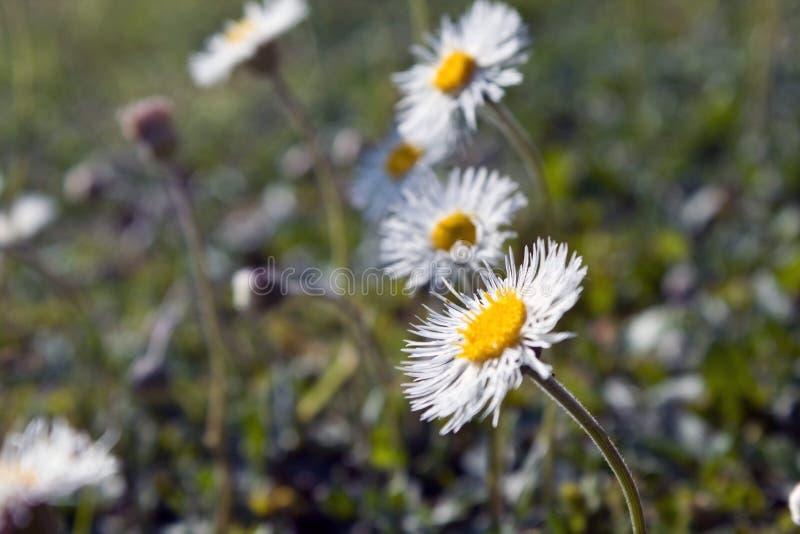 小小的花在庭院里 库存图片