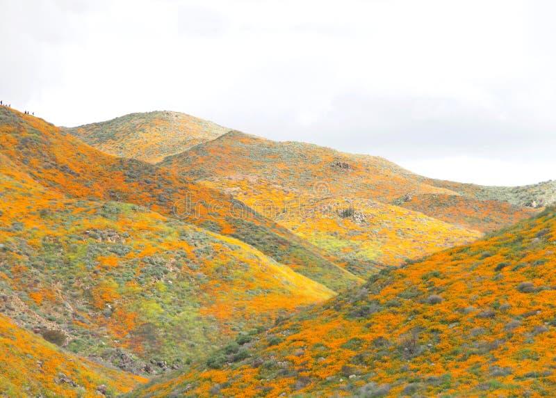 小山的看法沿步行者峡谷的在湖埃尔西诺超级绽放 免版税库存照片