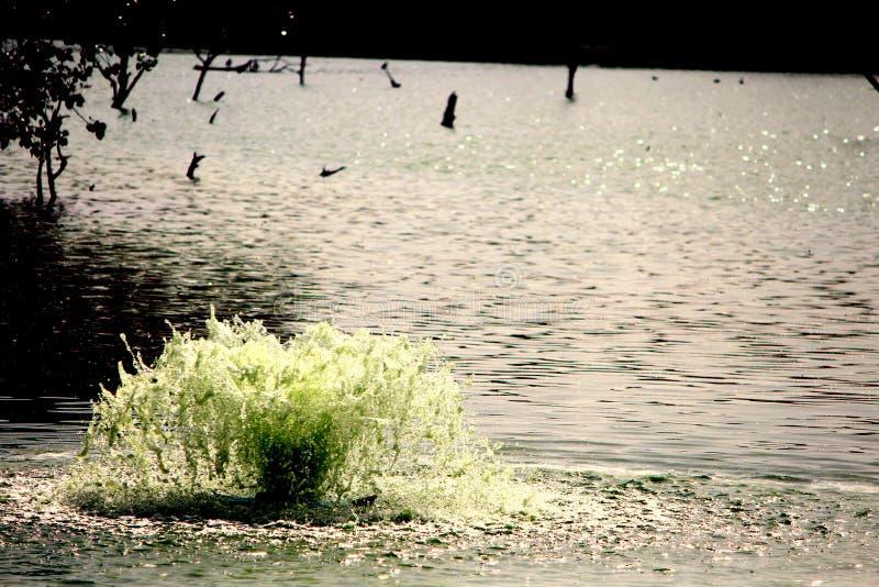小喷泉在湖 库存照片