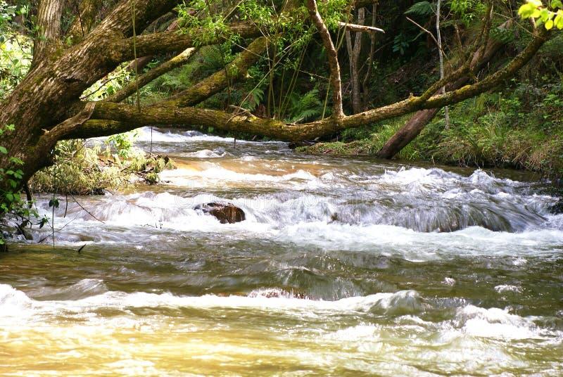 小河急流快速流动在谷下 库存图片