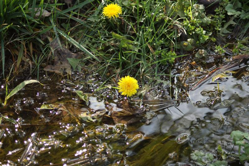 小河的绿色植物 免版税库存照片