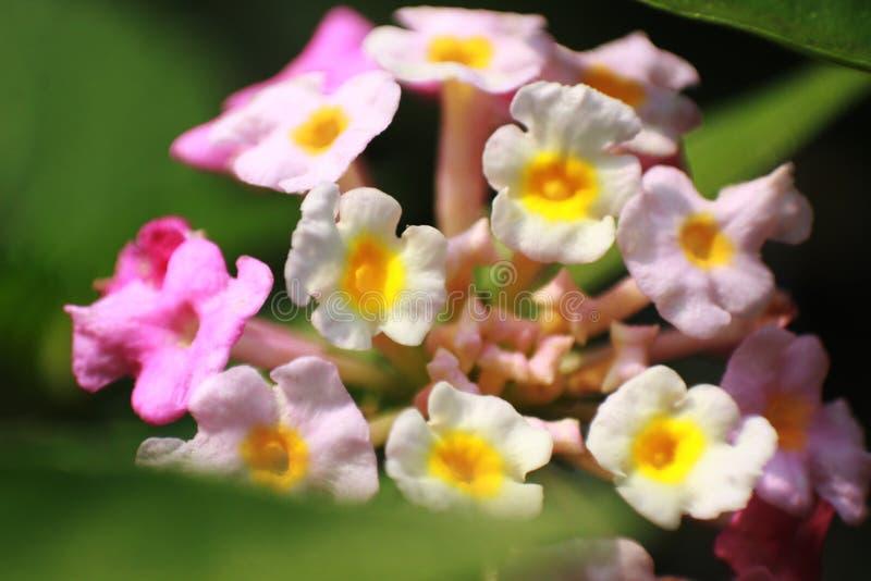 小混杂的颜色花关闭 免版税图库摄影