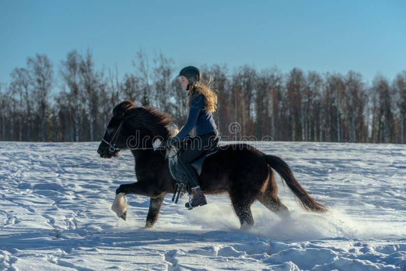 小跑在她的在深雪的冰岛马的年轻瑞典妇女 图库摄影