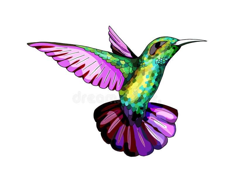 小蜂鸟 异乎寻常的热带colibri动物象 金黄鲜绿色羽毛 库存例证