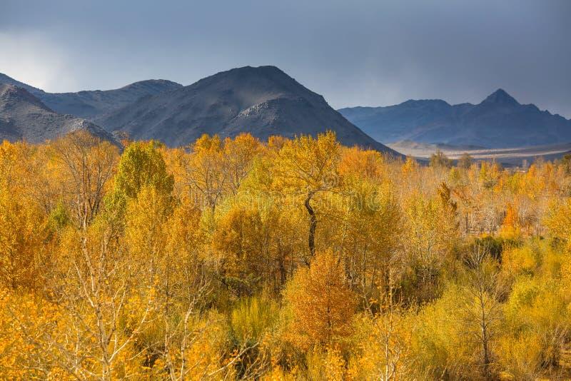 山景蒙古西部秋天风景  自然 免版税图库摄影