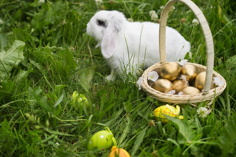 居住的复活节兔子用在一个篮子的鸡蛋在一个草甸在春天 库存照片