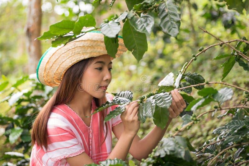 工作在咖啡种植园的年轻亚裔妇女 免版税库存图片