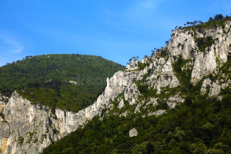 巨型从有显示光秃的岩石和绿色森林的峭壁的罗马尼亚喀尔巴阡山脉 库存图片