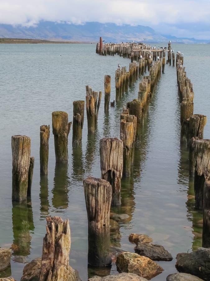 巴塔哥尼亚海湾和山从纳塔莱斯港有鸬鹚的在老打桩 库存图片