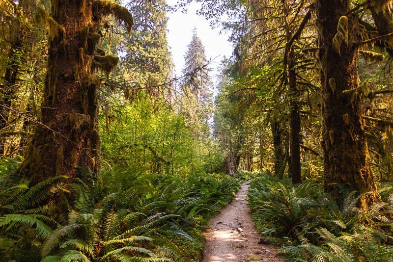 带领深深入夏天森林的鲜绿色的道路 免版税库存图片