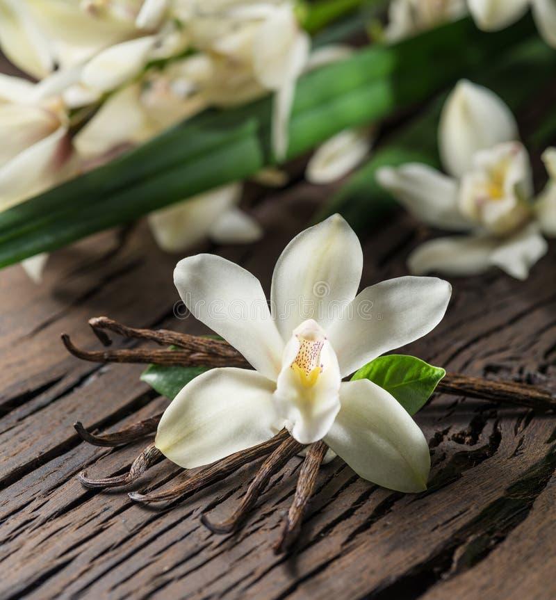 干香草棍子和香草兰花在木桌上 免版税库存图片