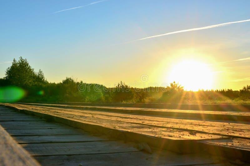 平衡的日落的太阳光芒在美妙的野生生物背景的  库存照片