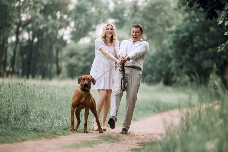 年轻丈夫和他的妻子有他们的爱犬的在步行在公园 库存图片
