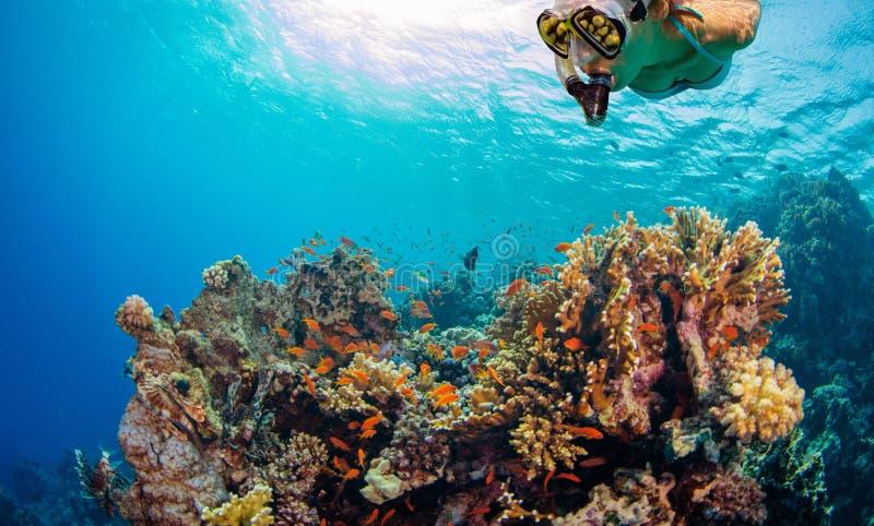 年轻女人潜航的和探索的珊瑚礁 免版税库存照片