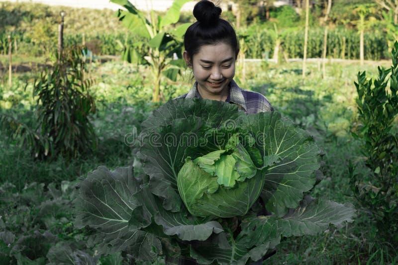 年轻农夫观察在归档的有些图玉米,Eco有机现代聪明的农厂技术概念 免版税库存照片