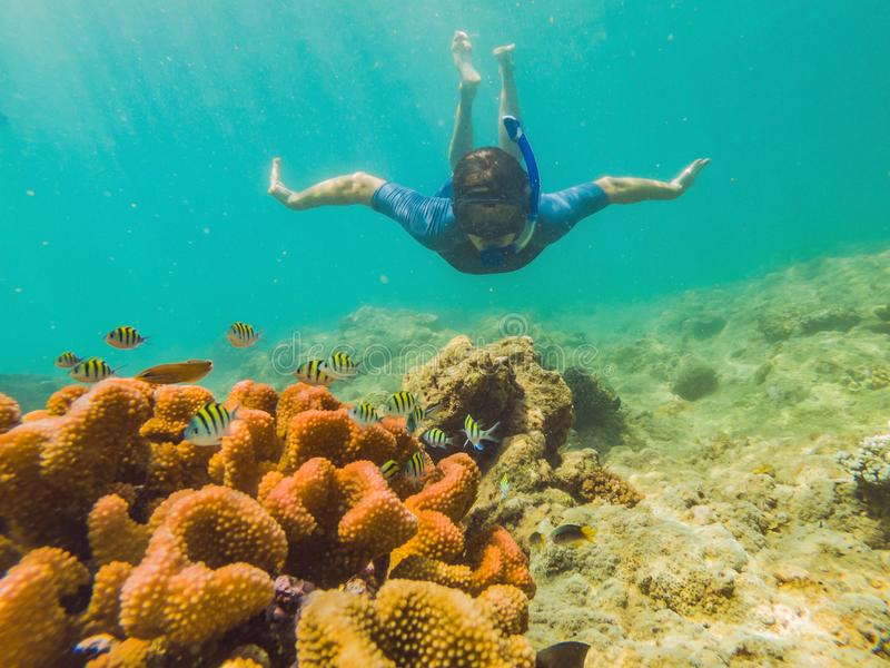 年轻旅游人游泳在绿松石海在珊瑚礁附近的表面下与潜航的面具为夏天 库存照片