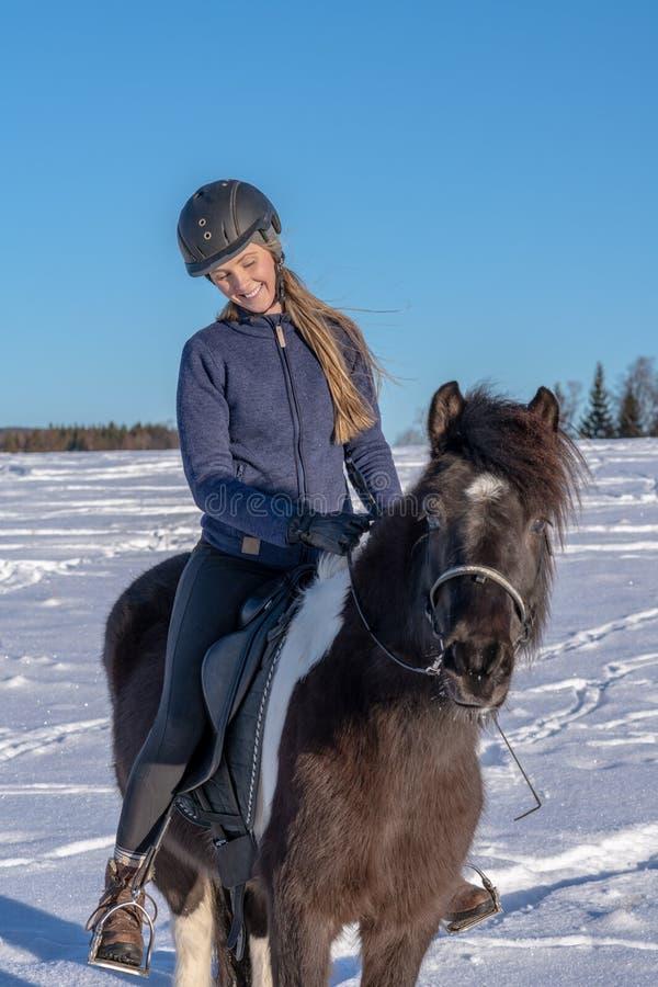 年轻瑞典妇女坐她的冰岛马在冬天阳光下 免版税图库摄影