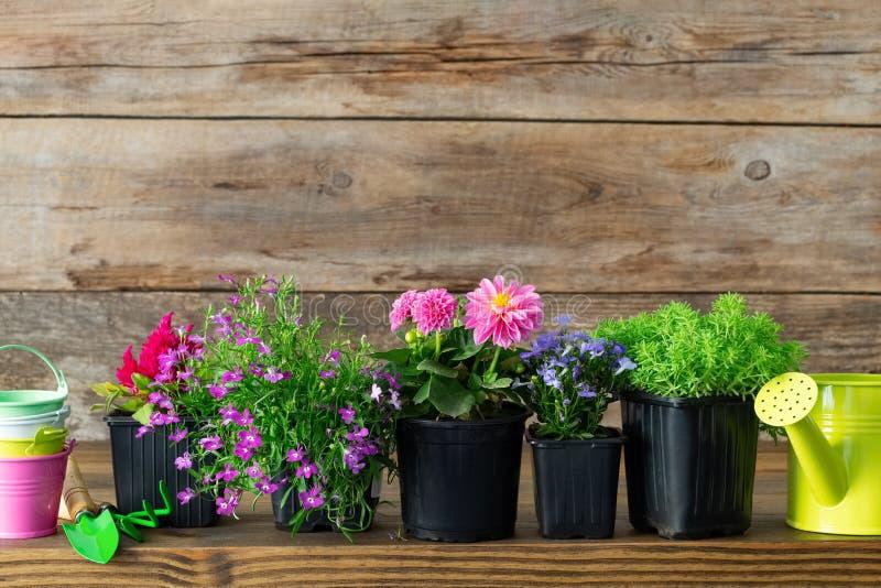 庭园花木和美丽的花幼木在花盆种植的在花床上 园艺设备 库存照片