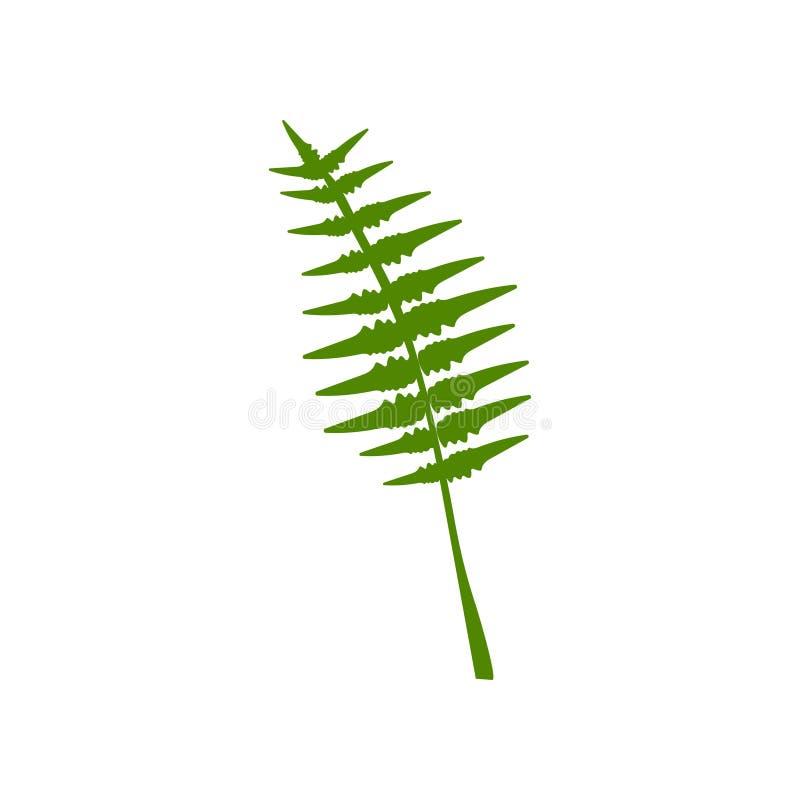 异乎寻常的热带羽毛似棕榈叶,植物的设计元素传染媒介例证 向量例证