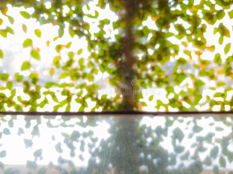 弄脏庭院窗口视图的图片  免版税库存照片