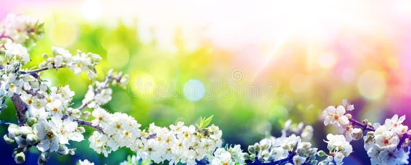 开花在春天-与趋向色板显示-杏仁花 免版税库存图片