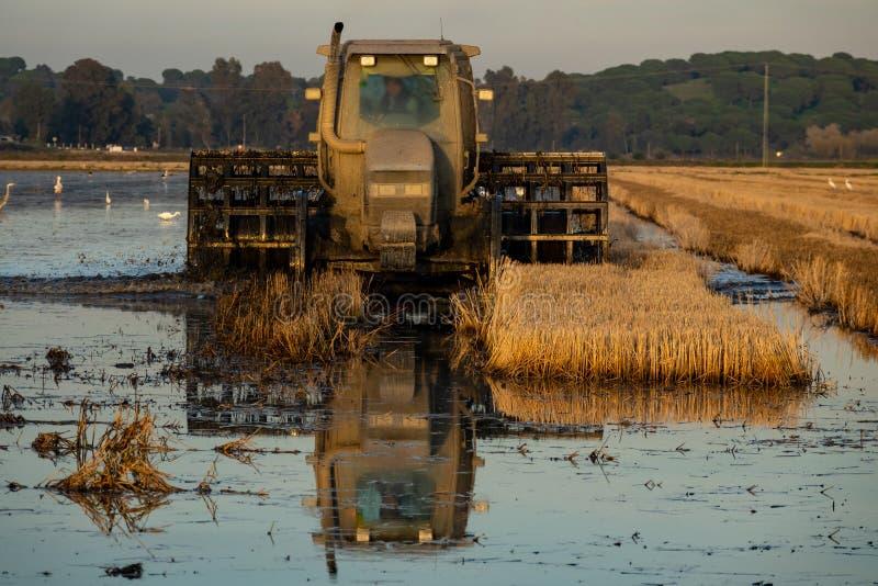 Żniwiarz maszyna zbierać ryżu śródpolnego działanie obrazy royalty free