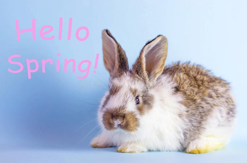 Żywy mały królik na błękitnym tle zdjęcia royalty free